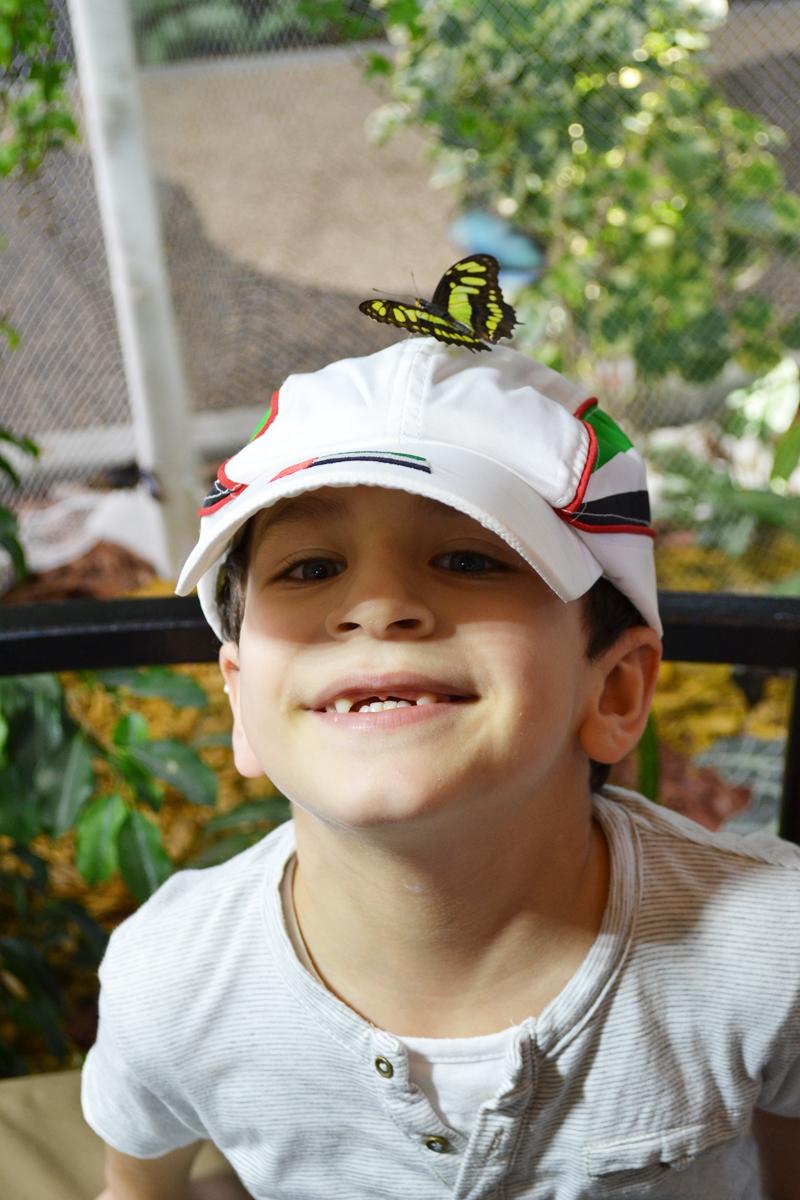 butterfly garden2