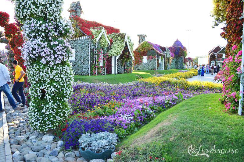 Dubai miracle garden (2)