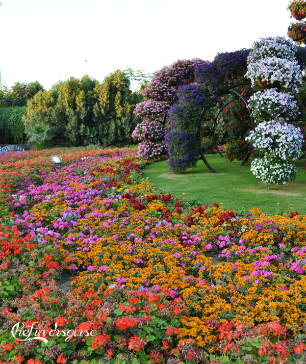 Flowers at Dubai miracle garden