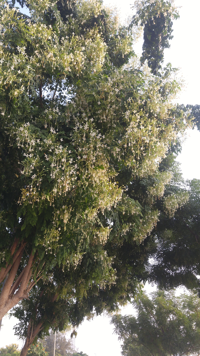 Trees in bloom.jpg
